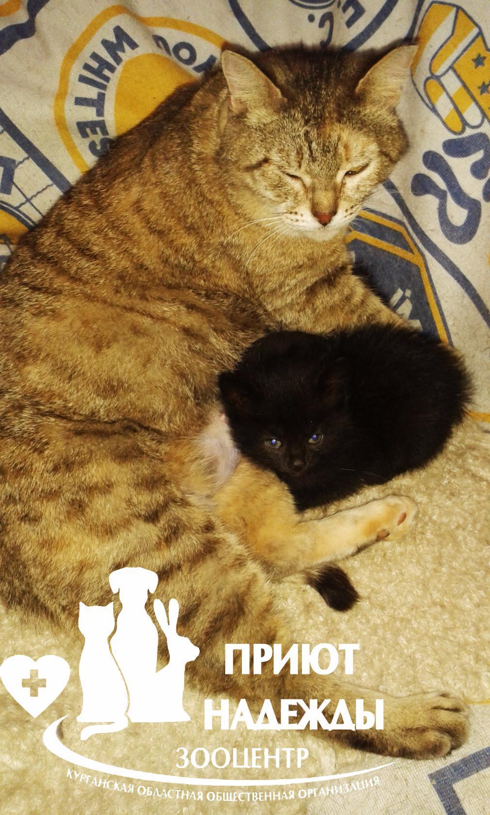 Мамочка с приемным ребенком