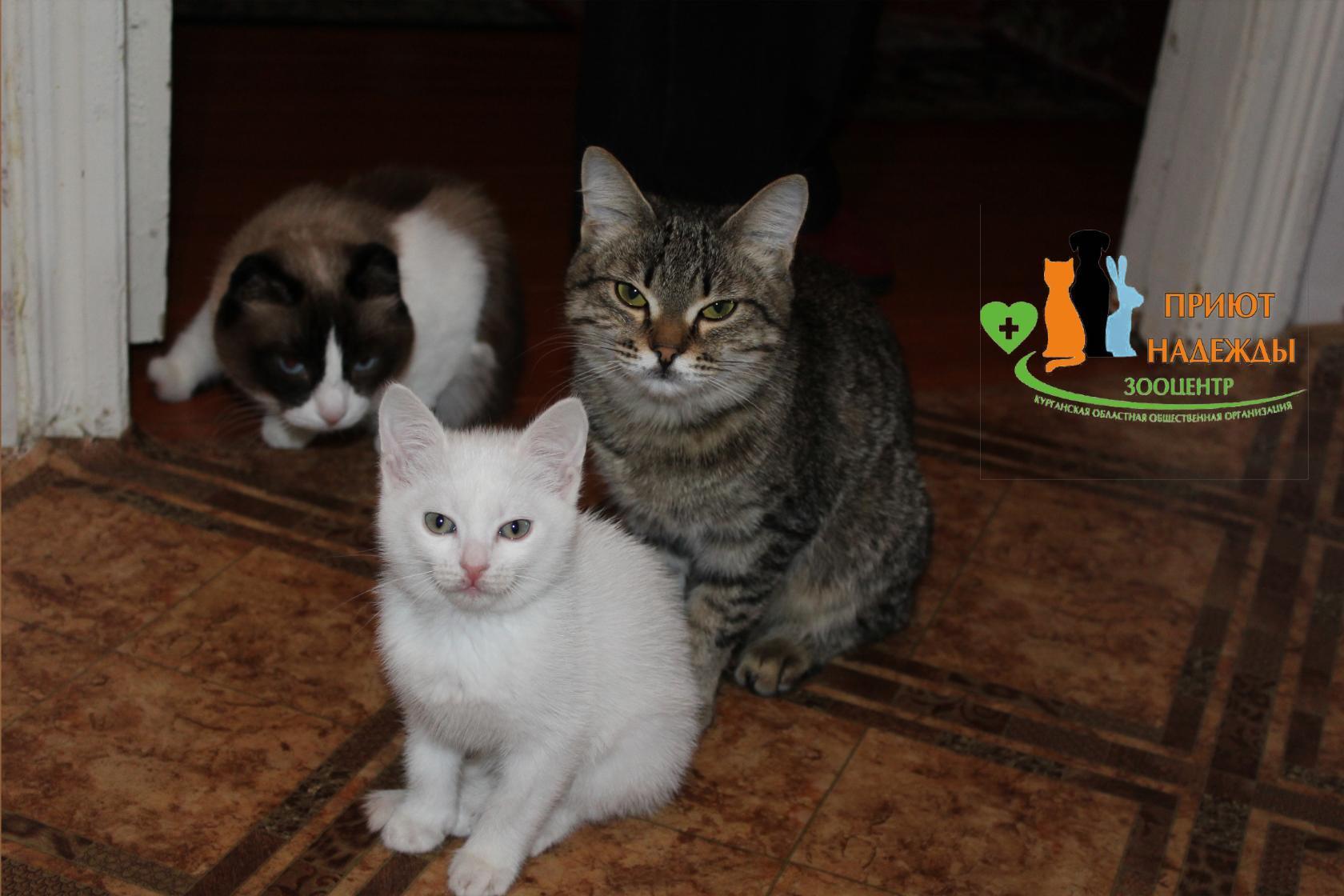 Маша, Сима и Тося