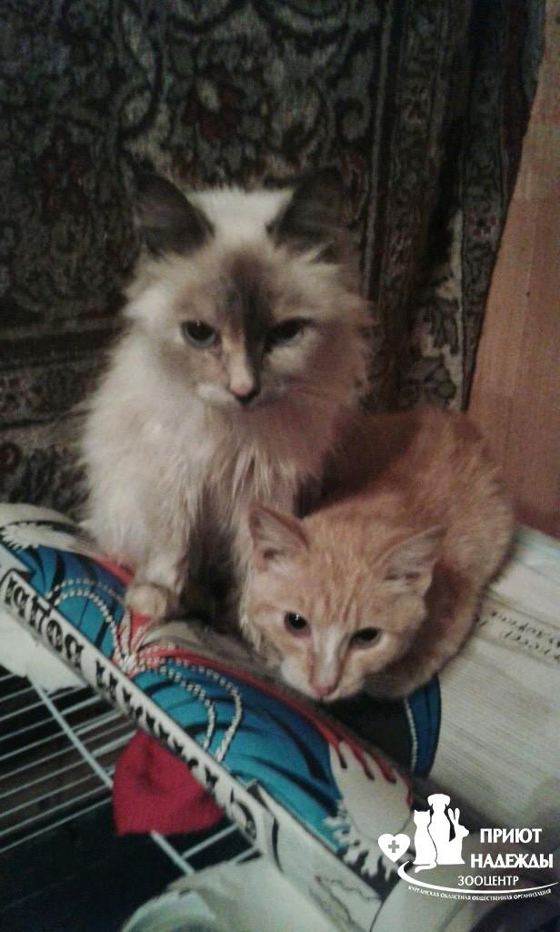 Кошка и котик
