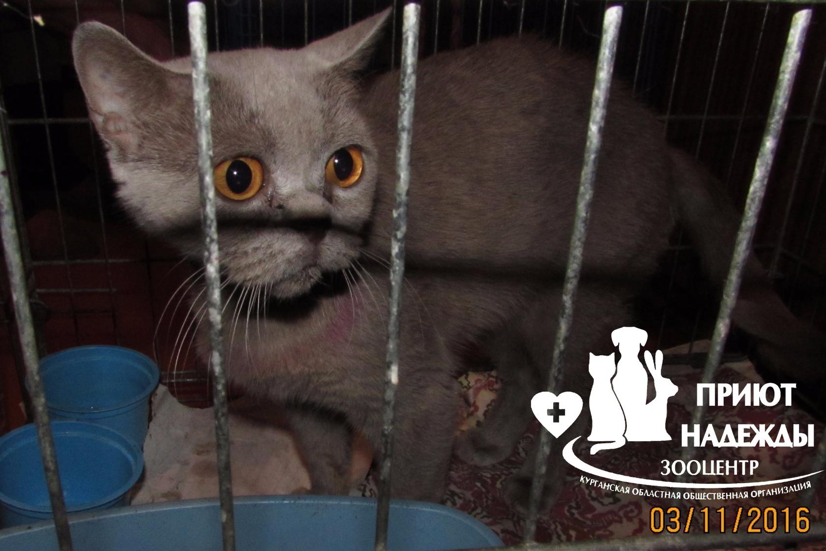 Кошка на лечении