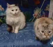 Сима и Маня