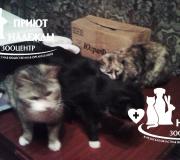 Кошки из Зеленого бора