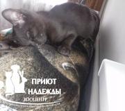 Котенок, девочка 2 мес