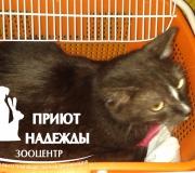 Кошка, готовим к стерилизации
