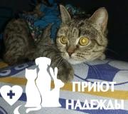 Кошка после стерилизации