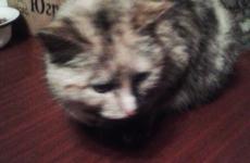 Кошка из Зеленого бора