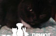 Кошка Багира
