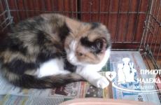 Кошка стерилизована