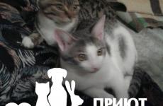 Кошка 4 мес